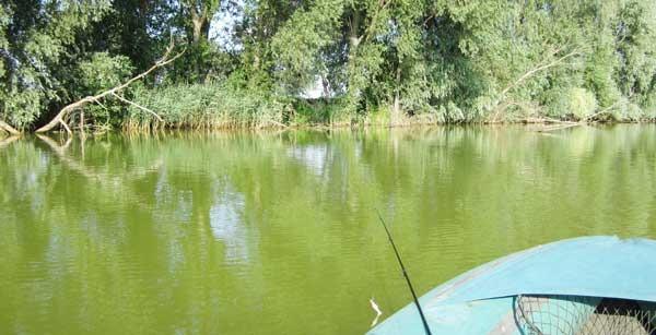 В лодке за озерным окунем