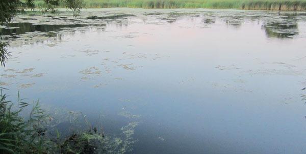 Летом многие водоемы или их участки сильно зарастают