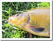 Ловля мирной рыбы