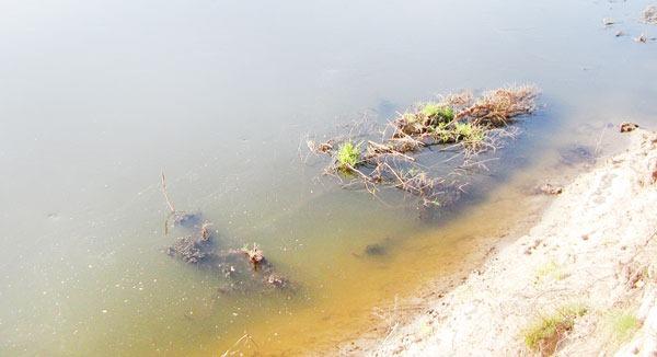 Небольшое дерево в воде