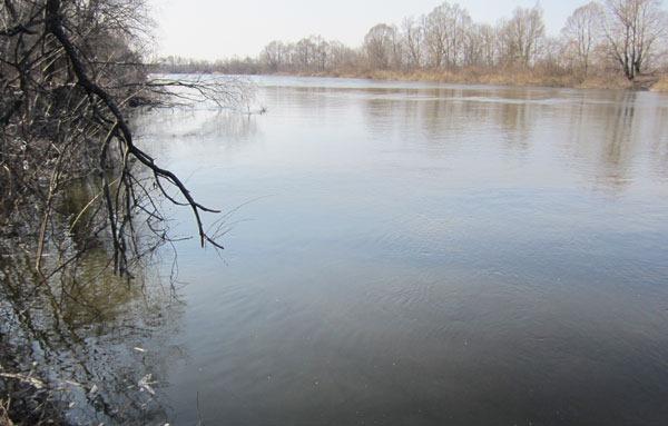 Мутные воды паводковой реки
