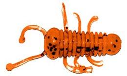 Aiko Beetle