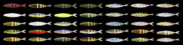 Цветовые решения Imakatsu Javallon