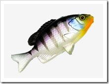 Рыбка Jackall Clone Gill