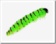 Силиконовая гусеница Molix CW Worm. Отзывы