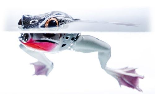 Лягушка на поверхности
