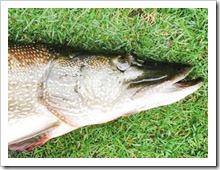 Секреты ловли крупной рыбы на спиннинг