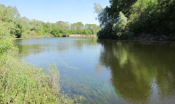 На реке, у границы водорослей