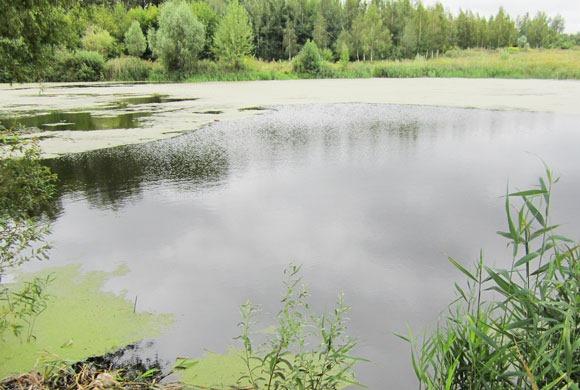 Небольшое заросшее озеро населяют щуки