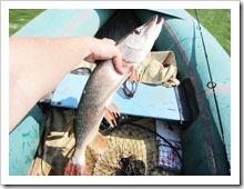 Особенности ловли щуки спиннингом на мягкие приманки в водоемах без течения
