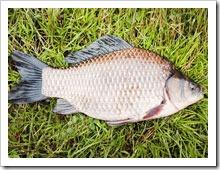 Съедобка на мирную рыбу