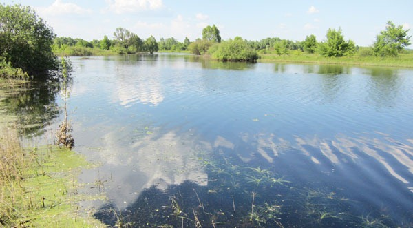 Заросший мелководный залив реки