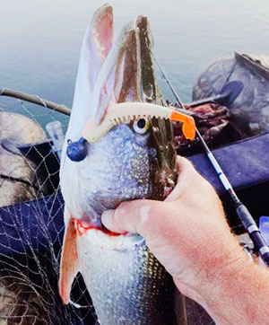 Как брать рыбу рукой