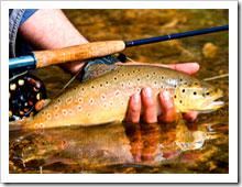 Как ловить форель в ручьях