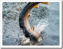 Рыбалка на топвотеры