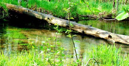 Форелевые места на ручье