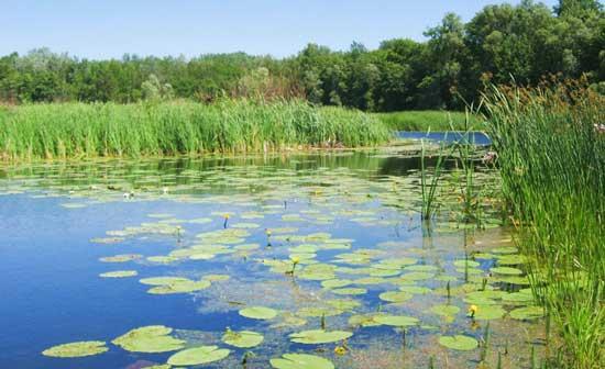 Рыболовные места около водной растительности