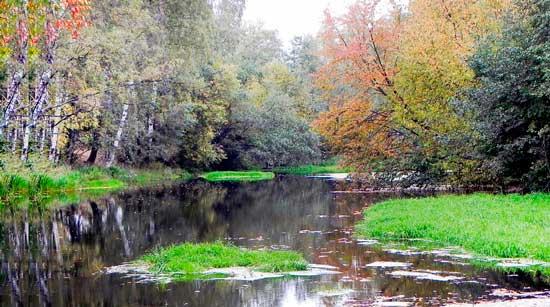 Островок травы на малой речке