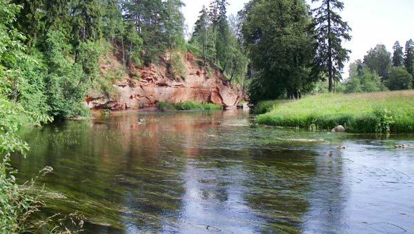 Растительность в реке