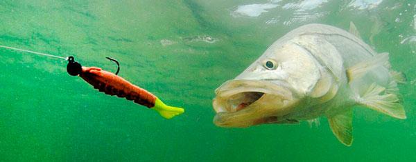 Рыба атакует приманку