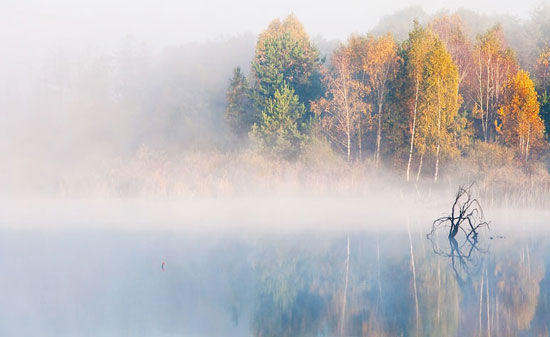 Туман над водой